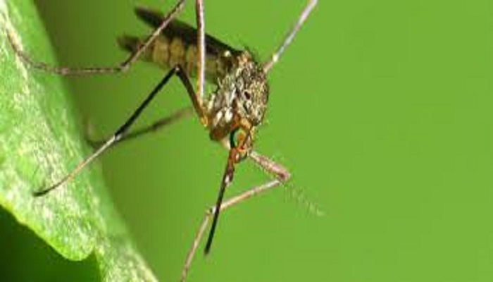 मक्खी-मच्छर रहेंगे कोसों दूर