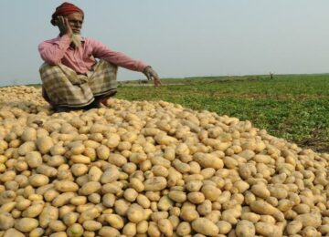 aloo prices is down