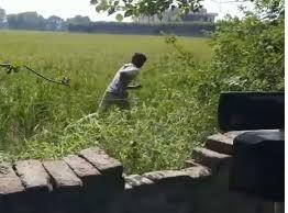चोरो ने खेतो में लगे शौर्य ऊर्जा पैनल उड़ाये