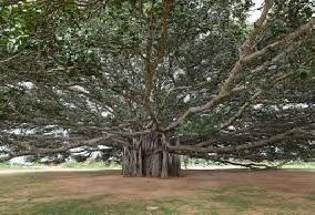 जिला प्रशासन ने वृक्षों के संरक्षण की जिम्मेदारी वन विभाग को सौंपी