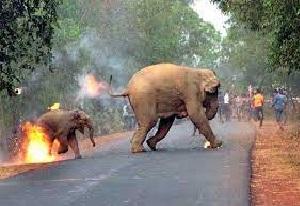 बढ़ती घटनाओं से इंसान ही नहीं, वन्य जीव तक परेशान